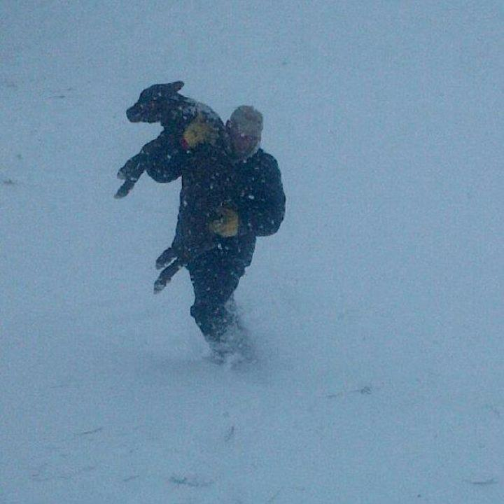 blizzard-calf.jpg