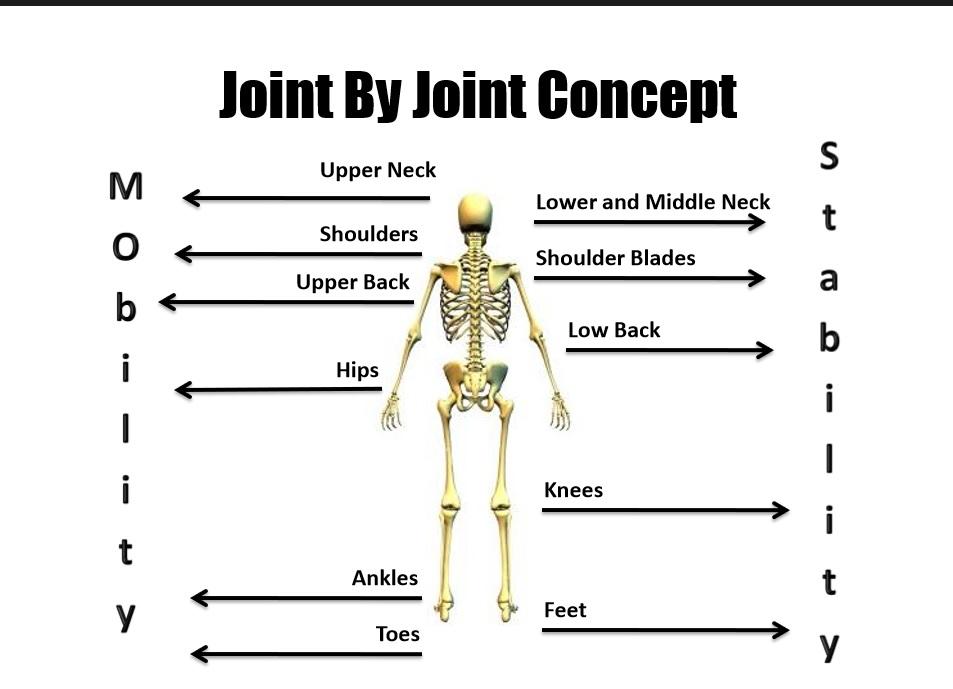 stronger knees