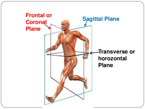 Solving the Mystery of Rotational Training