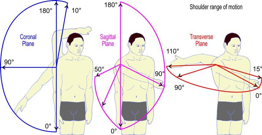 ShoulderMotionAngle.ENsmall - 3 Keys To Healthy & Strong Shoulder Workouts