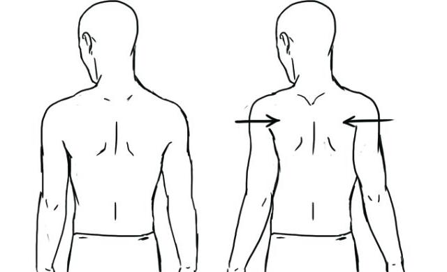 scapular retraction - The Power Of THIS Upper Body Exercise