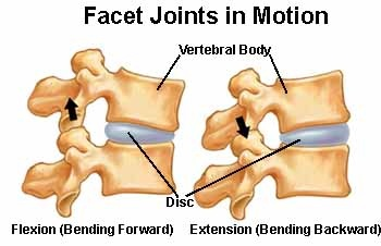 facet joints - Why THIS Low Back Exercise Is Bad